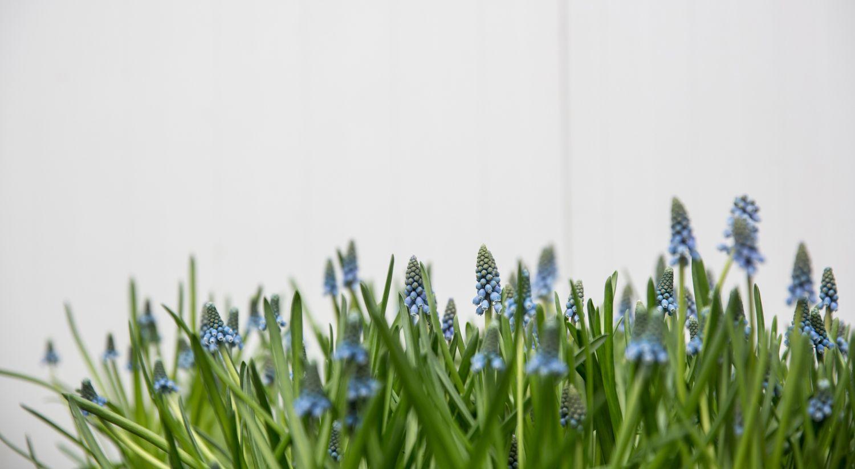 בממלכת הפרחים של הדליקטסן