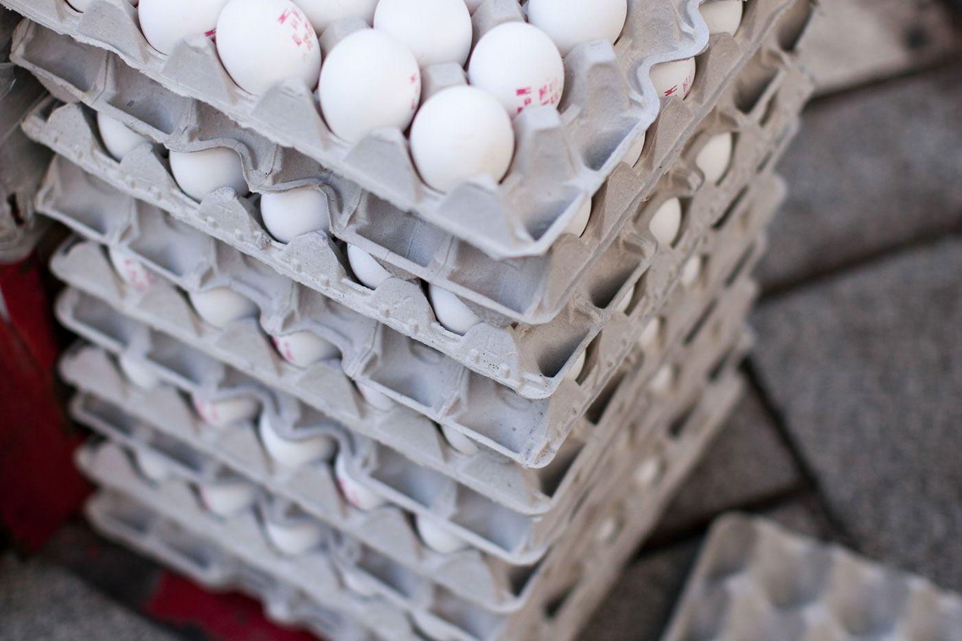 ביצים וחלב