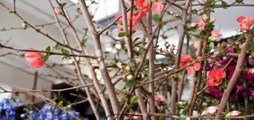 עשו זאת בעצמכם: סידורי פרחים לשבועות