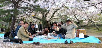 החיים בוורוד: פריחת הסאקורה בטוקיו