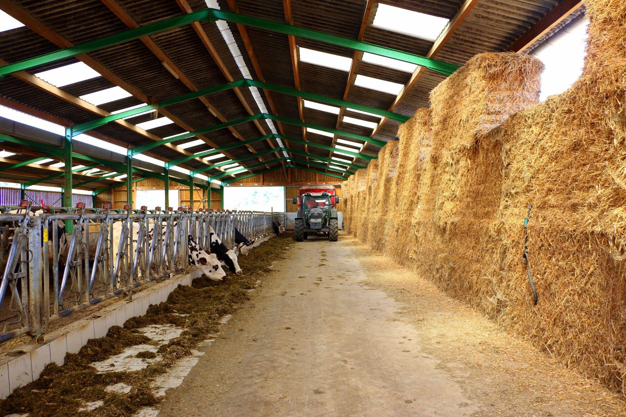 לדוראן יש עדר של 60 פרות האחראיות על ייצור החלב לגבינות הקממבר
