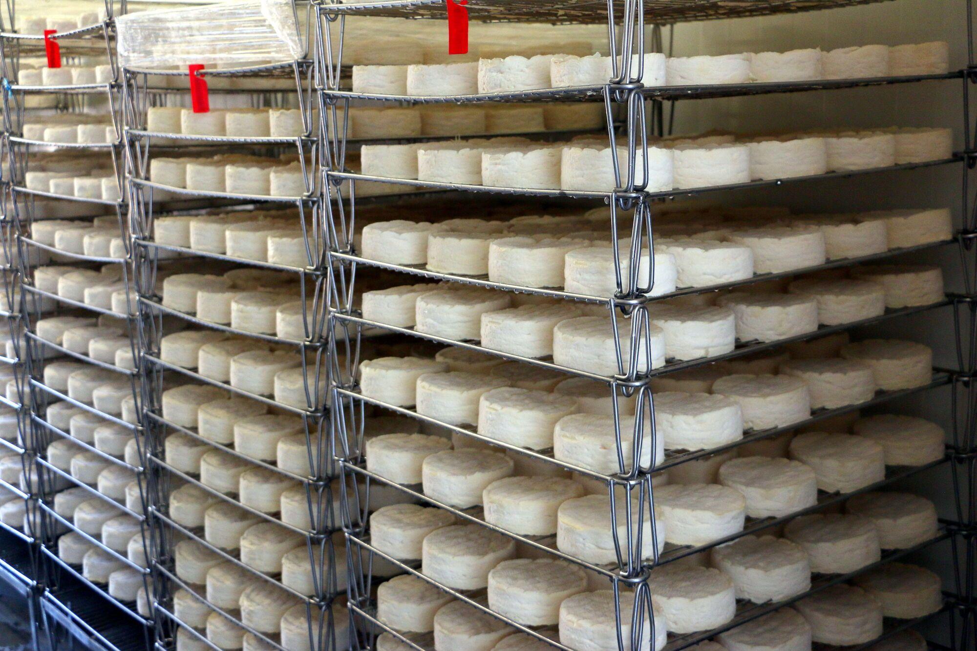גבינת קממבר במהלך ההכנה