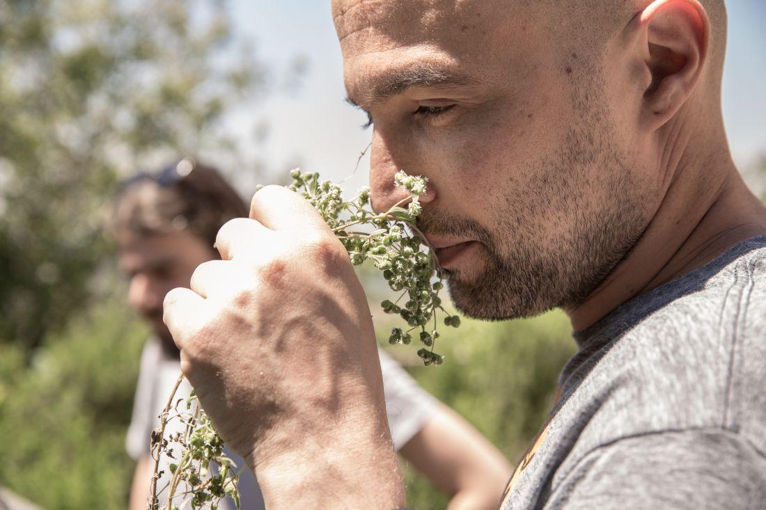 מרחרים ולועסים עשבים בבוסתן של ארז